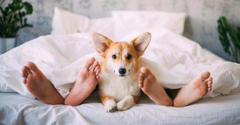 Собака в постели