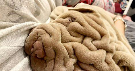 скомканное одеяло открыло глаза