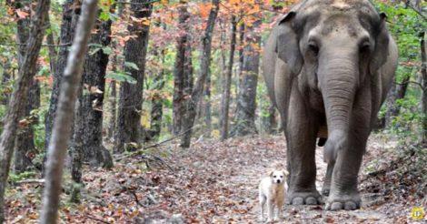 Слониха ждала маленького друга