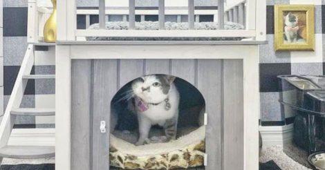 сделали кошке настоящий коттедж