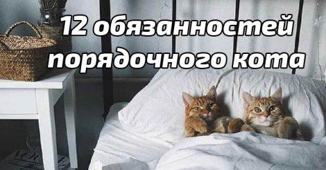 обязаности правильного кота