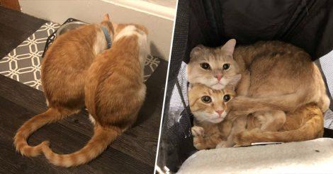 Два кота сразу