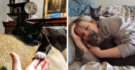 преданные коты