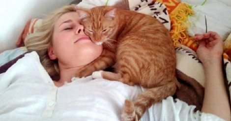 различные позы кота