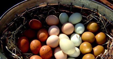 мы ищем крупные яйца
