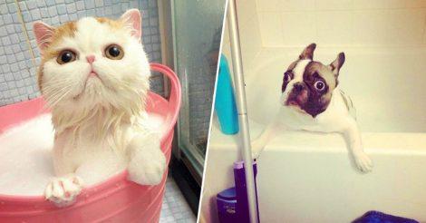 зверушки принимают ванну