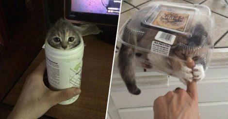 Котики обожают залезать
