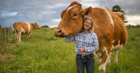 Австралийцы заводят коров