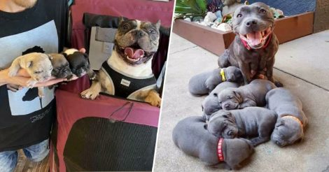 Гордые собачьи мамы