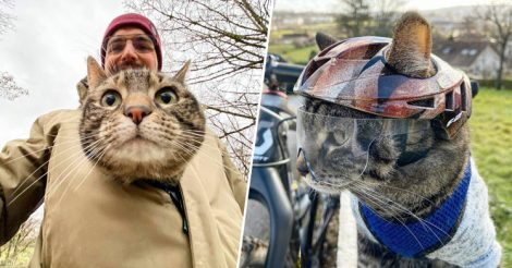Кошка Катод