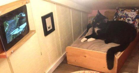 комнату для любимого кота
