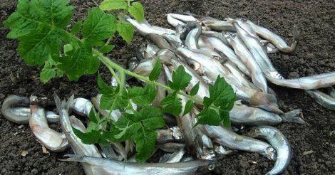добавлять рыбу в лунки