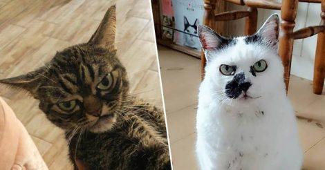 Рассерженные коты