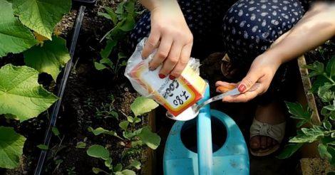 сода поможет спасти огород