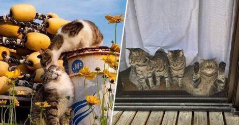 котики с другой планеты