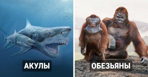 прародители современных животных