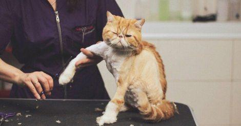 нельзя стричь котов