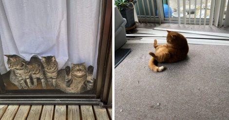 Смысл котиков
