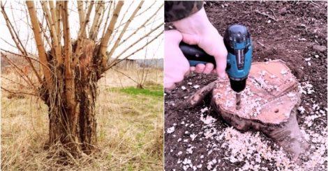 избавиться от поросли деревьев