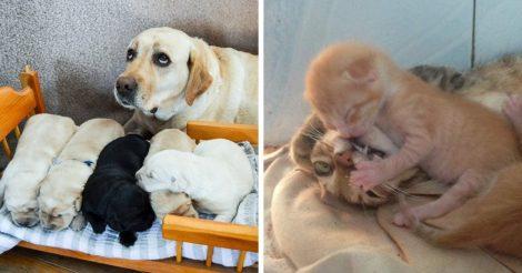 Животные, которые стали родителями