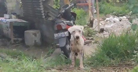 Голодный пес через месяц