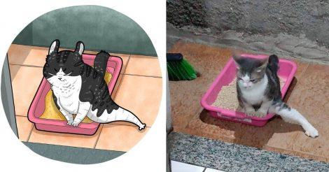 Мемные коты