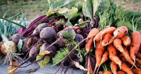 сохранить морковь и свеклу
