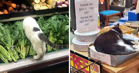 Коты стали хозяевами магазинов