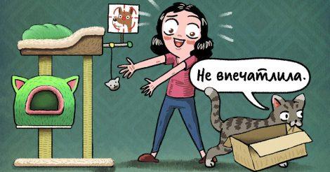 15 правил кошачьего кодекса