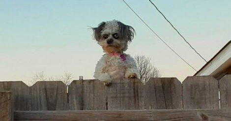 соседский пес похож на демона